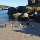 Penguins at Boulders Beach short walk from Seagetaway