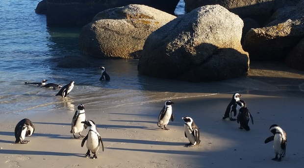 SEAgetaway Accommodation Simonstown is a short walk from Boulders Beach Penguin Colony